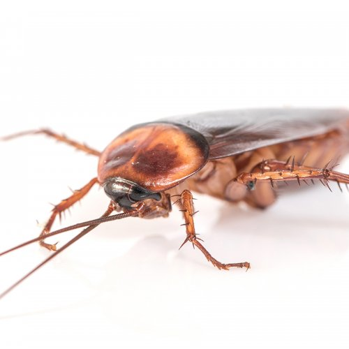 close up photograph of a cockroach by FotoLoveCamera
