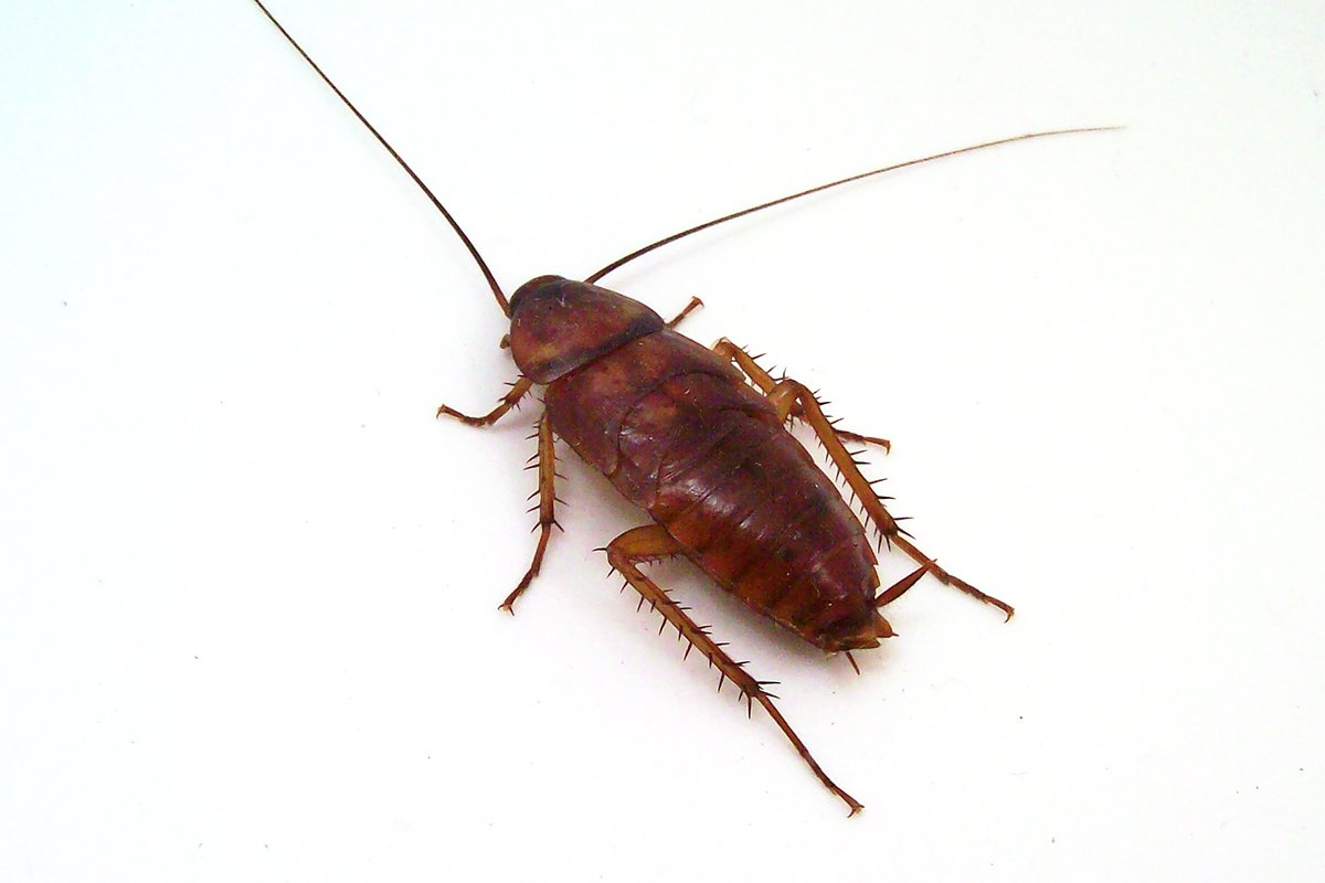 close up photograph of a cockroach