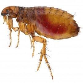 A M Pest Control-fles-control-lydney