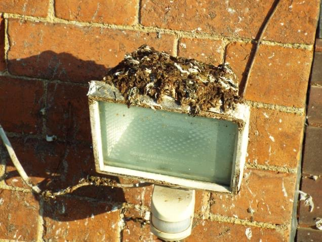 A-M-Pest-Control-pigeon-clean-up-gloucester