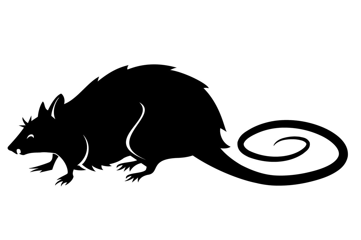 illustration of a rat in black and white