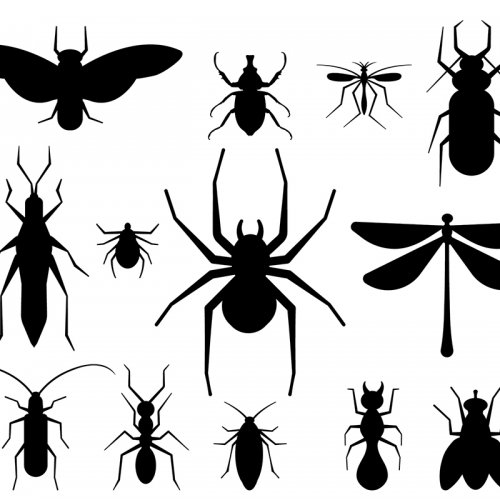 graphic design of insects as silhouettes