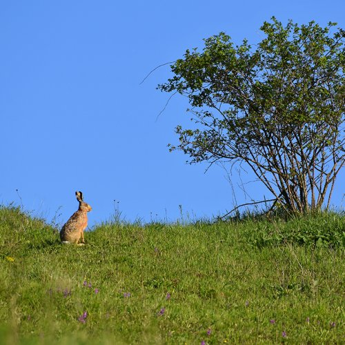 photograph of wild rabbit and tree by Montypeter - https://monty-photography.webnode.cz/