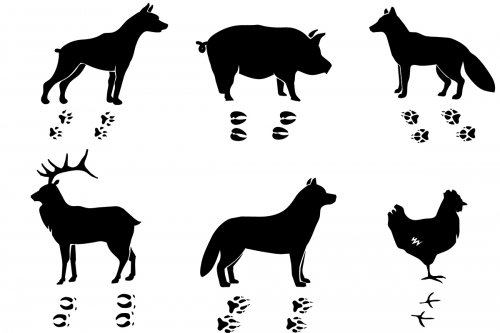 Silhouette of Animals and their Tracks