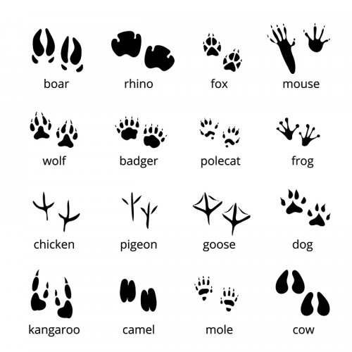 Silhouette of Animal Tracks representing different animals and birds